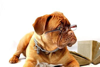 perro con gafas y un libro de vocabulario inglés