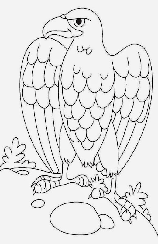 baby eagle coloring page collections
