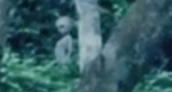 http://3.bp.blogspot.com/-mfd6a8884Qg/UXR1NLL0cwI/AAAAAAAAAHs/hZ6LppV4a3I/s1600/alien-filmed-in-amazon-forest.png