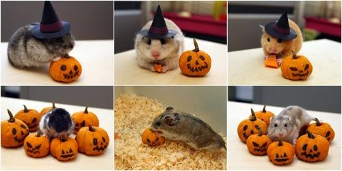 La Cuisine De Veronica Halloween Hamsters