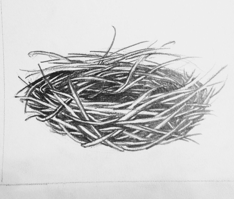 Empty bird nest drawing