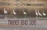 Tweet and See