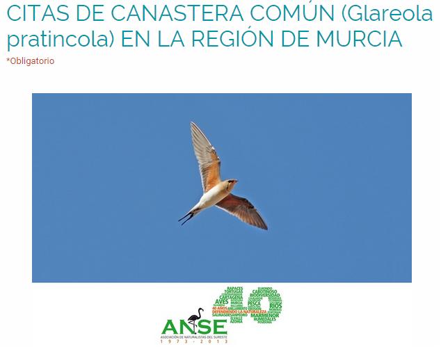¿Has visto alguna Canastera común (Glareola pratincola)?