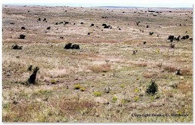 Roswell Debris Field