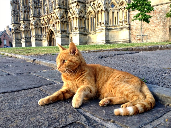 Photo Friday - most viewed link - Louis the Cathedral Cat from Traveling Cats - http://www.traveling-cats.com/2015/12/cat-from-wells-england.html#.VnOMZxUrLIU