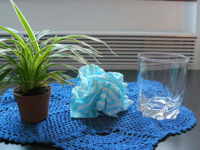 Lamirose un plante sur la table for Mini plante verte