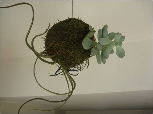 mini jardim aquatico:Flor&Ser – Arte e Paisagismo: Outubro 2012