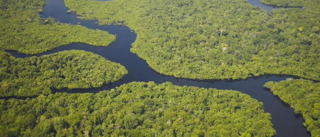 Amazon Rainforest -- Brazil