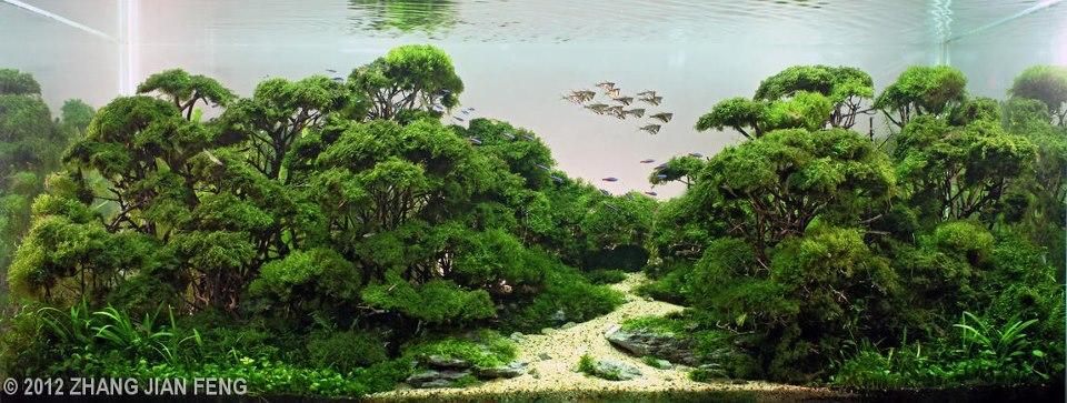 IWAQU Toko Ikan Hias - Aquascape, Ikan Hias, Aquarium dan