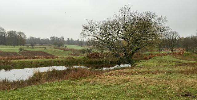 Pond in Knole Park, November 2015.