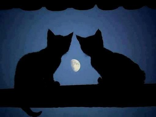 Cats to the moon