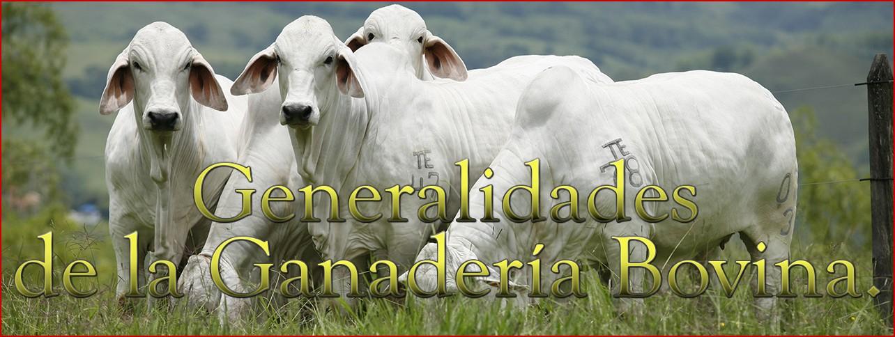 Generalidades de la Ganadería Bovina.