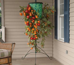 http://3.bp.blogspot.com/-miuvA3ewZ9Q/UPMOQ2a-vUI/AAAAAAAADp0/sbCKjrQfn9k/s320/tomatoe.jpg