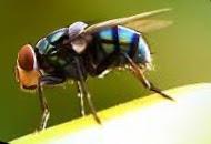 Cara Menanggulangi Gangguan Lalat