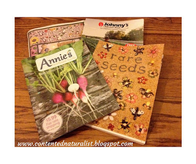 Photograph of seed catalogs from Annie's Heirloom Seeds, Johnny's Selected Seeds, Southern Exposure Seed Exchange, & Baker Creek Heirloom Seed Company