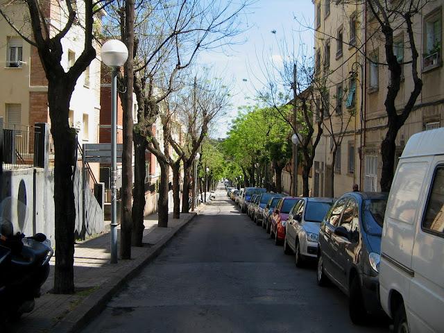 Mi calle repleta de árboles en el principio de los tiempos
