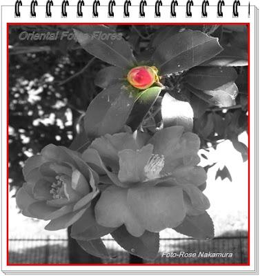 Linda foto de flores -Foto Rose Nakamura