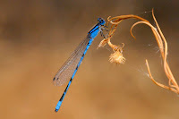 Dragon Fly Photos and Pictures 21