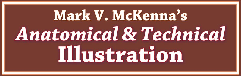 McKenna-Anatomical&Technical Illustration