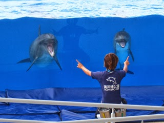 水中で指示を仰ぐイルカたちの写真