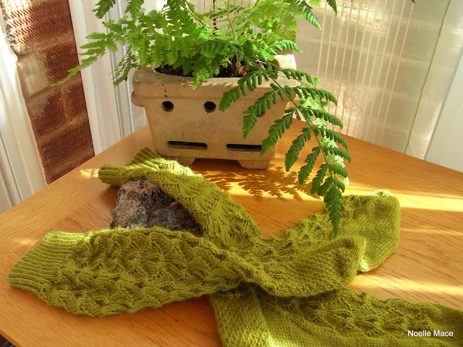 Do Ferns Grow Under Oak Trees : Have started to grow more ferns in the garden their forms are so