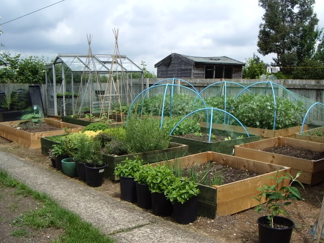 slowly surely geometric garden
