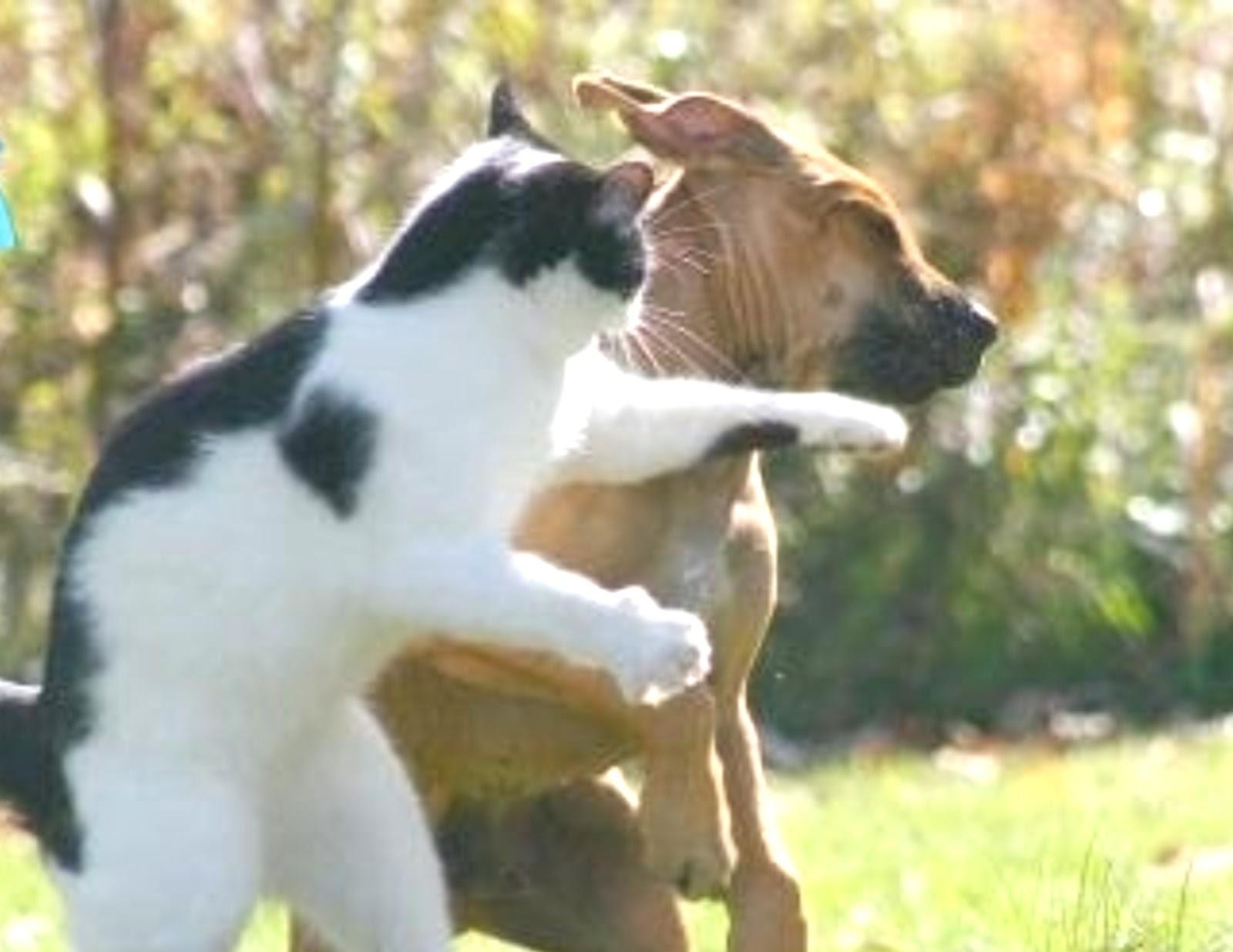 Cat Hitting Dog