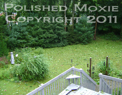 Picture of leaf littered backyard post hurricane irene