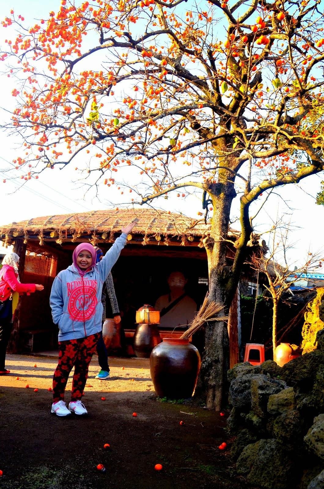 ~jeju island 2014~