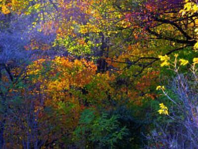 Meacham grove 2