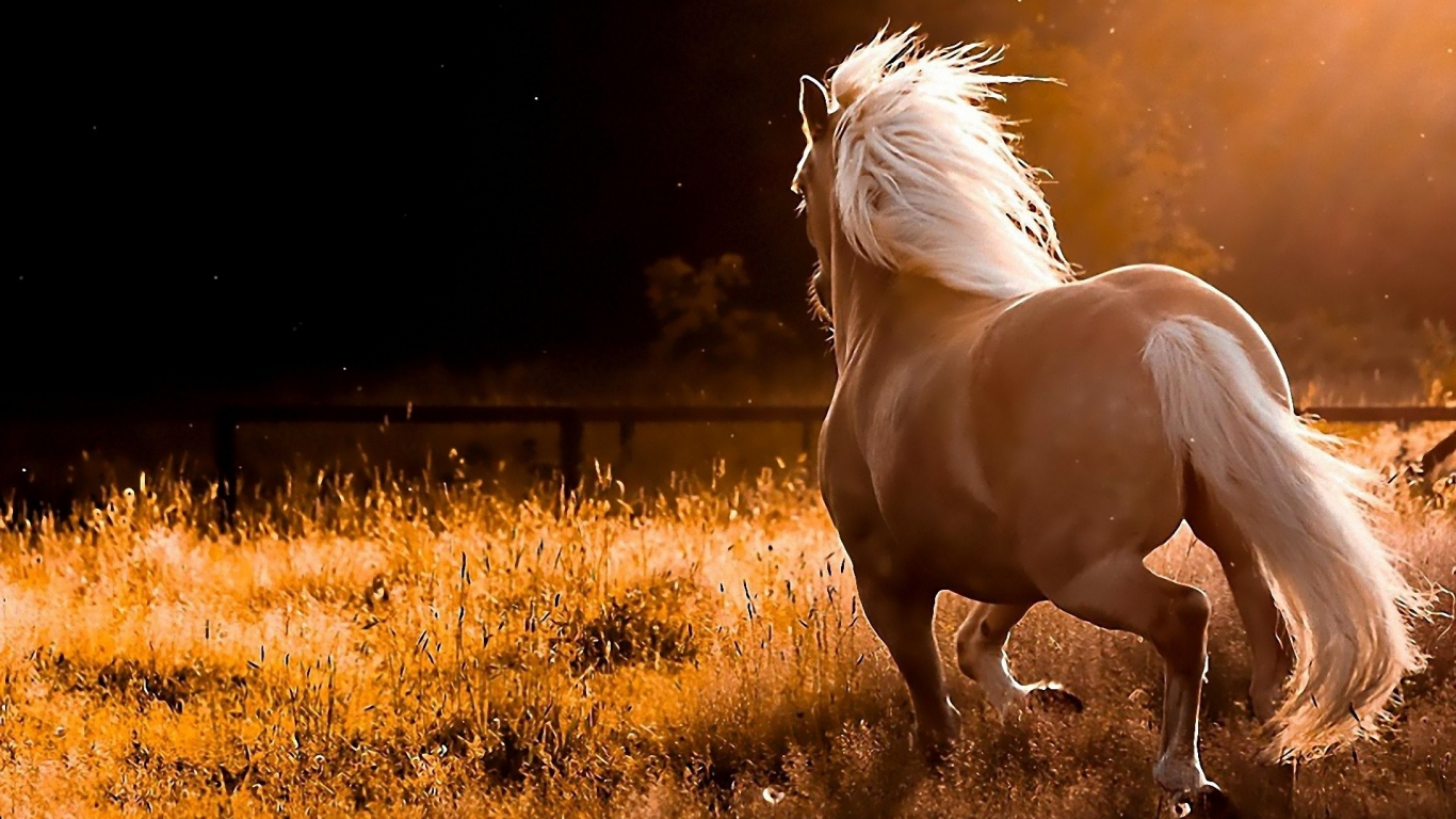 wild horses racing wallpaper - photo #26