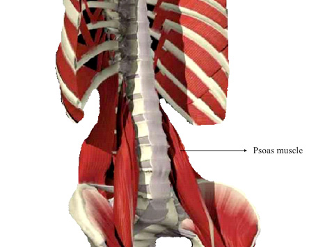 psoas muscle and martial artists | be not defeated by the rain, Human Body