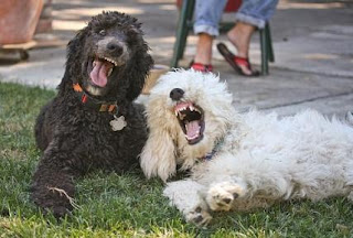 Funny Laughing Dogs