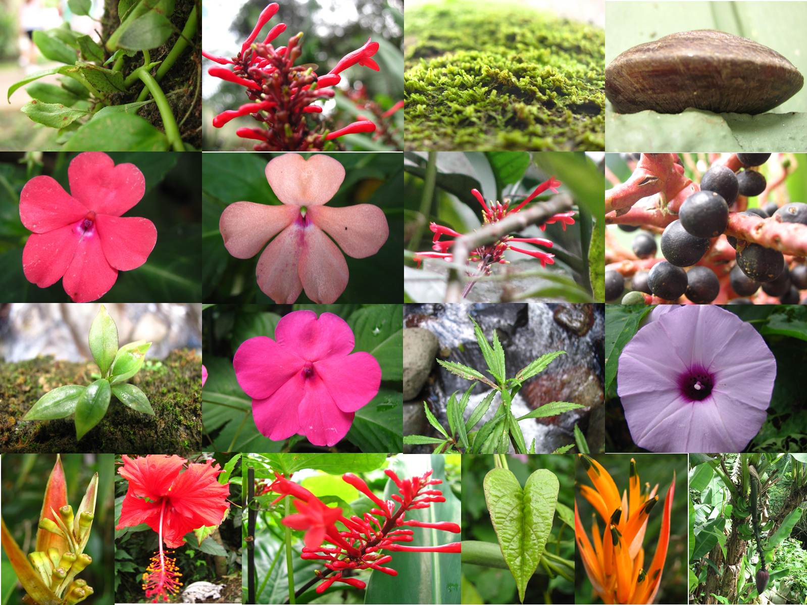 Plants In The Tropical Rainforest Collage Tropical Rain Forest B...