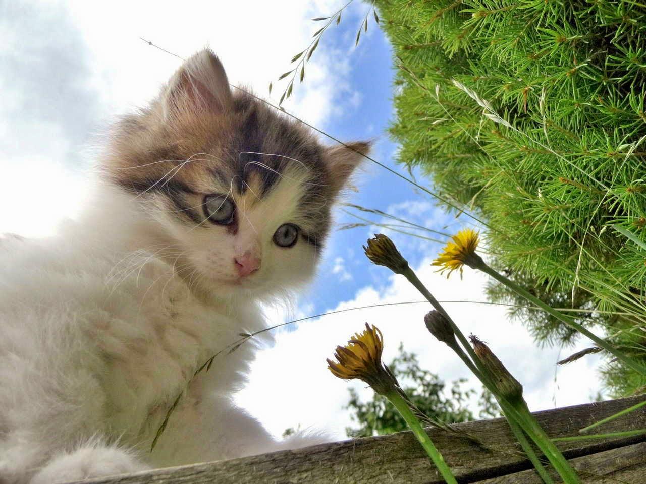 Funny cats - part 154, cat photos, best cat picture