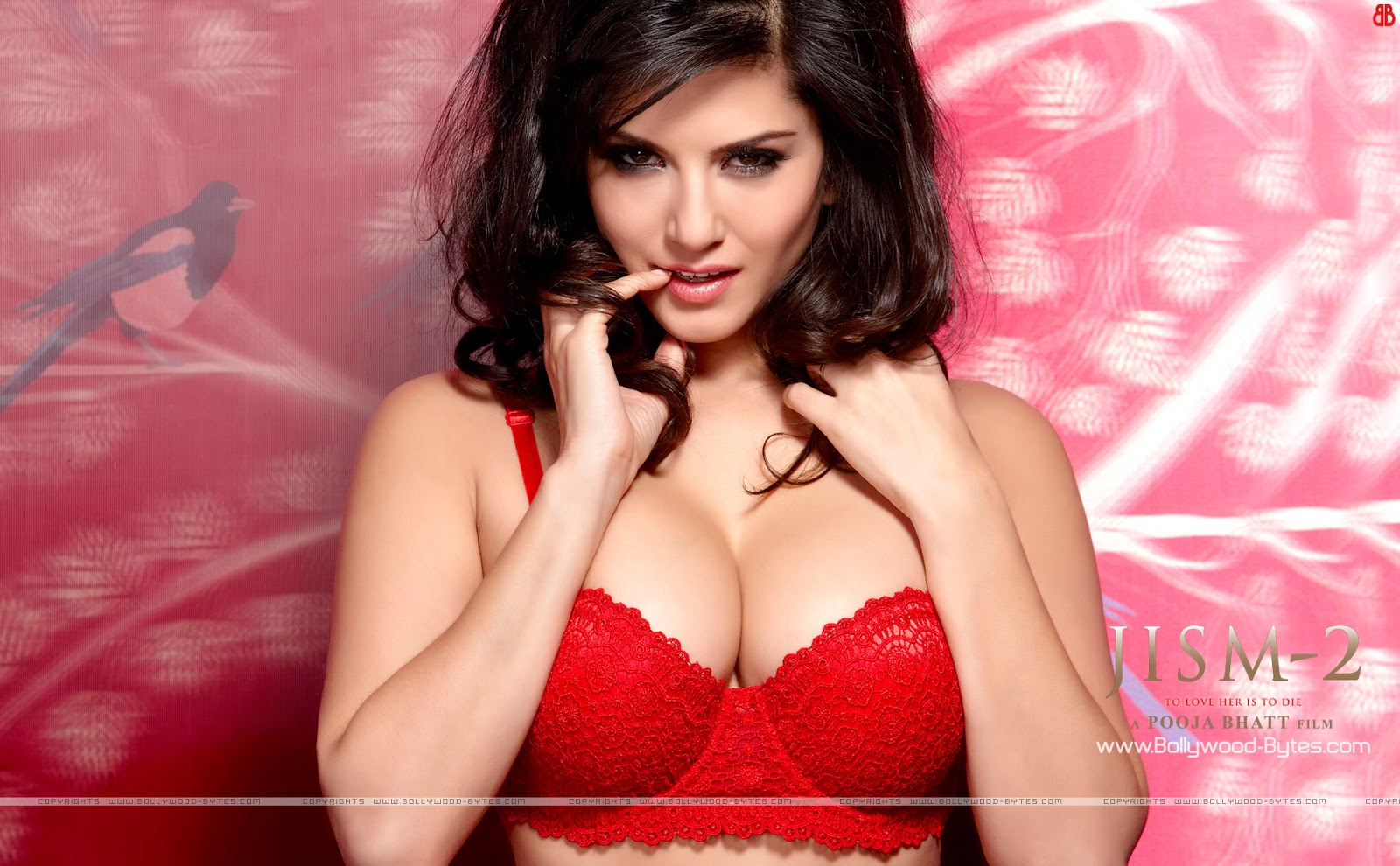 Sunny Leone Hot HD Wallpapers Download - Hot Pictures Download of