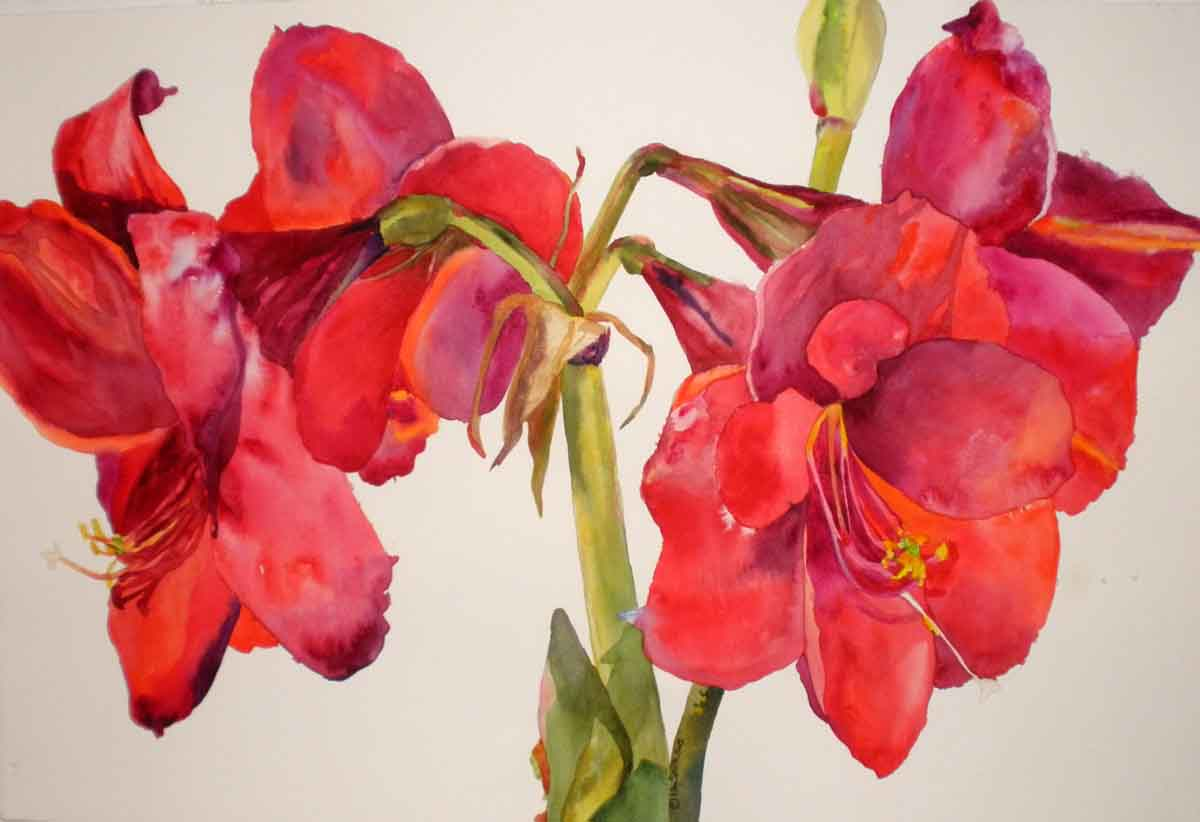 how to draw an amaryllis
