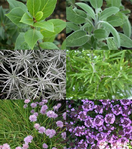 La bulle de bonheur les herbes aromatiques - Herbes aromatiques cuisine liste ...