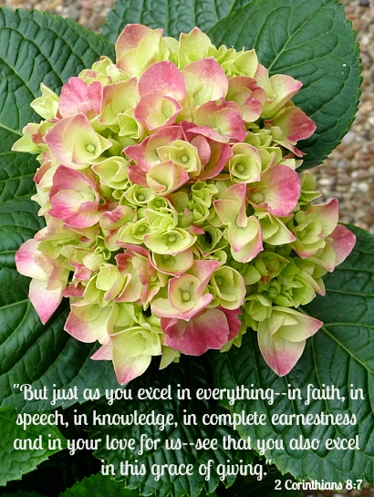 Pink Hydrangea with 2 Corinthians 8:7