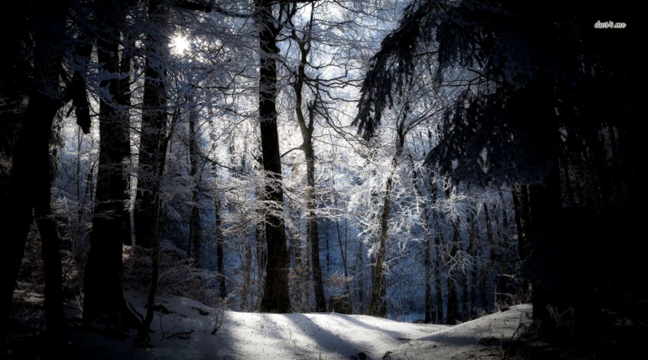 3288 Snowy Night Forest Wallpaper
