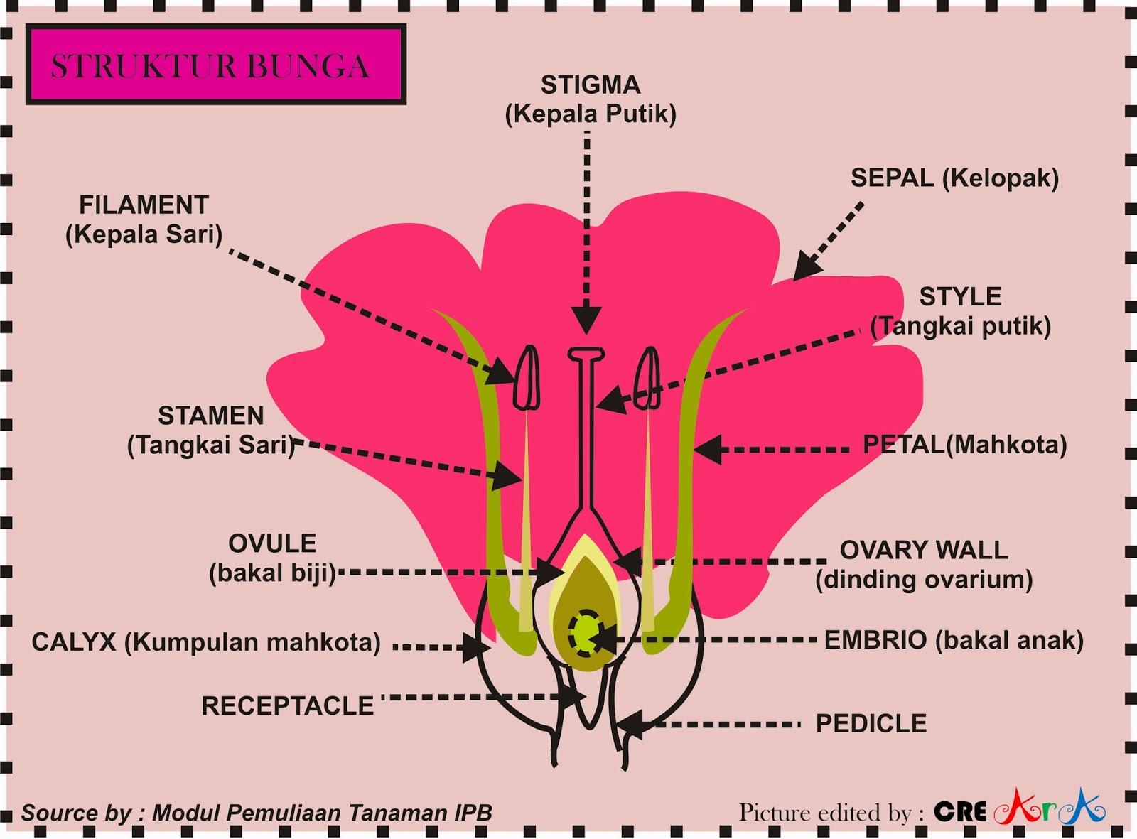 Morfologi Tumbuhan Bagian Bagian Bunga