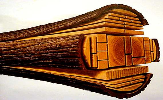 Los recursos del bosque febrero 2013 for La beta de la madera