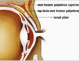 Anatomi konjungtiva mata