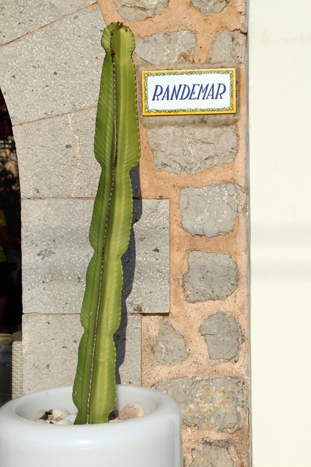 Lange Kaktee im Topf mit Keramik Logo Randemar