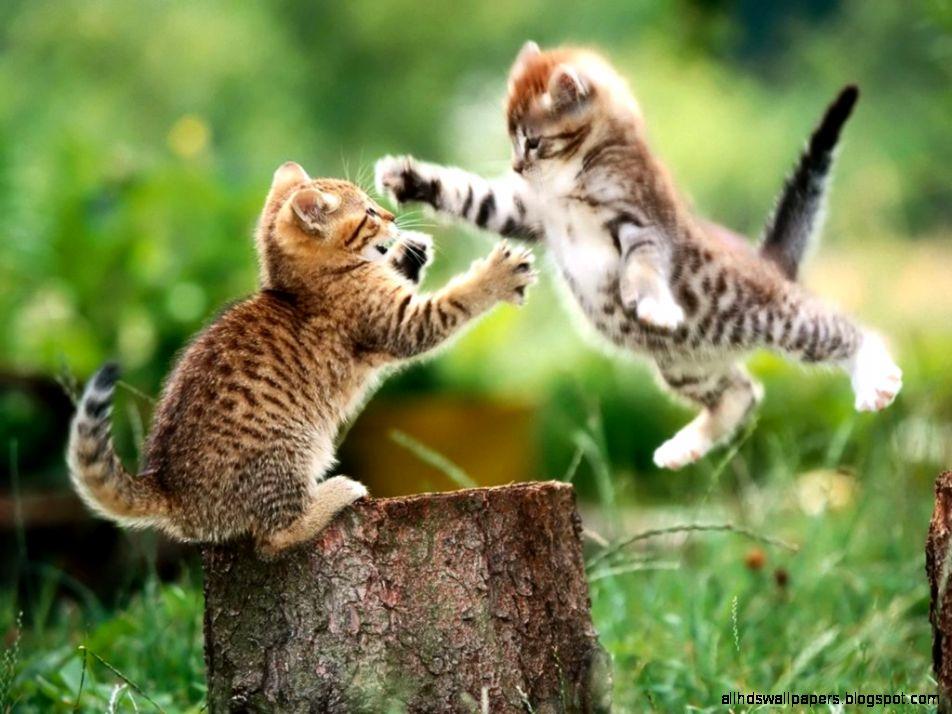 Funny cats 1   رسانه ی خبری وبلاگی