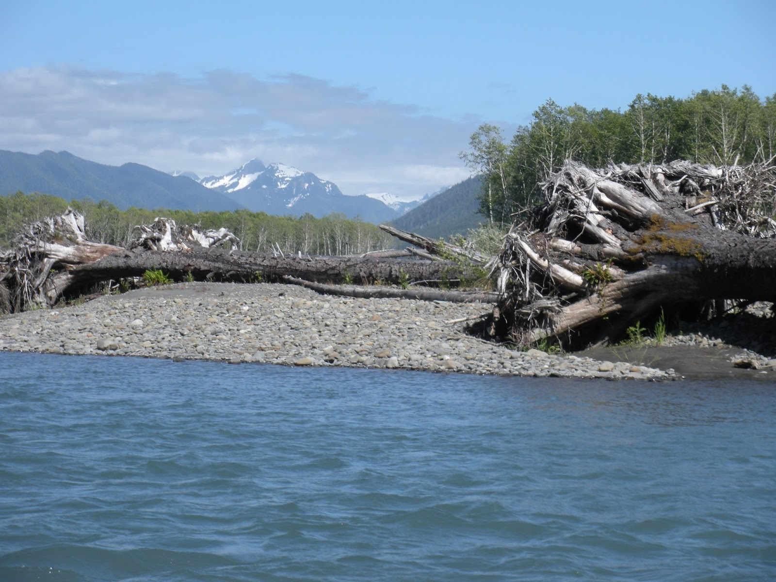 Pat neal wildlife places on the olympic peninsula to send for Hoh river fishing