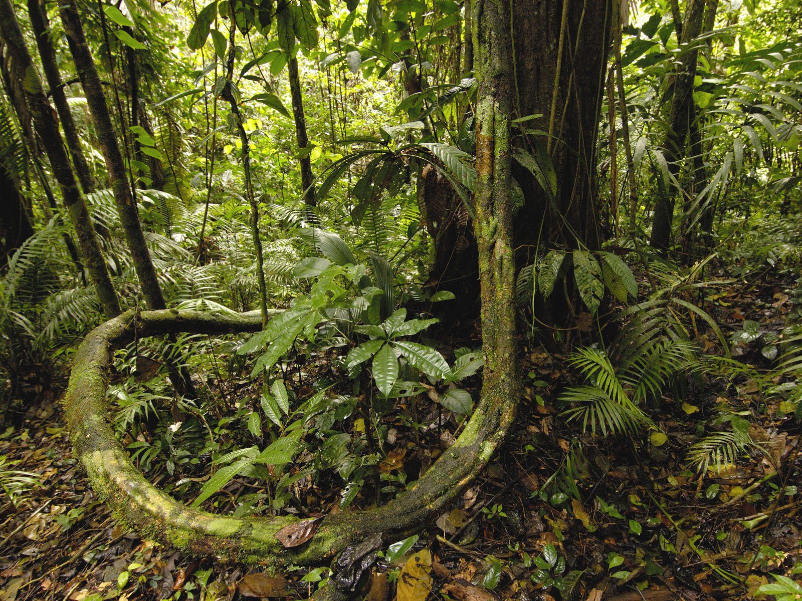 rainforest background