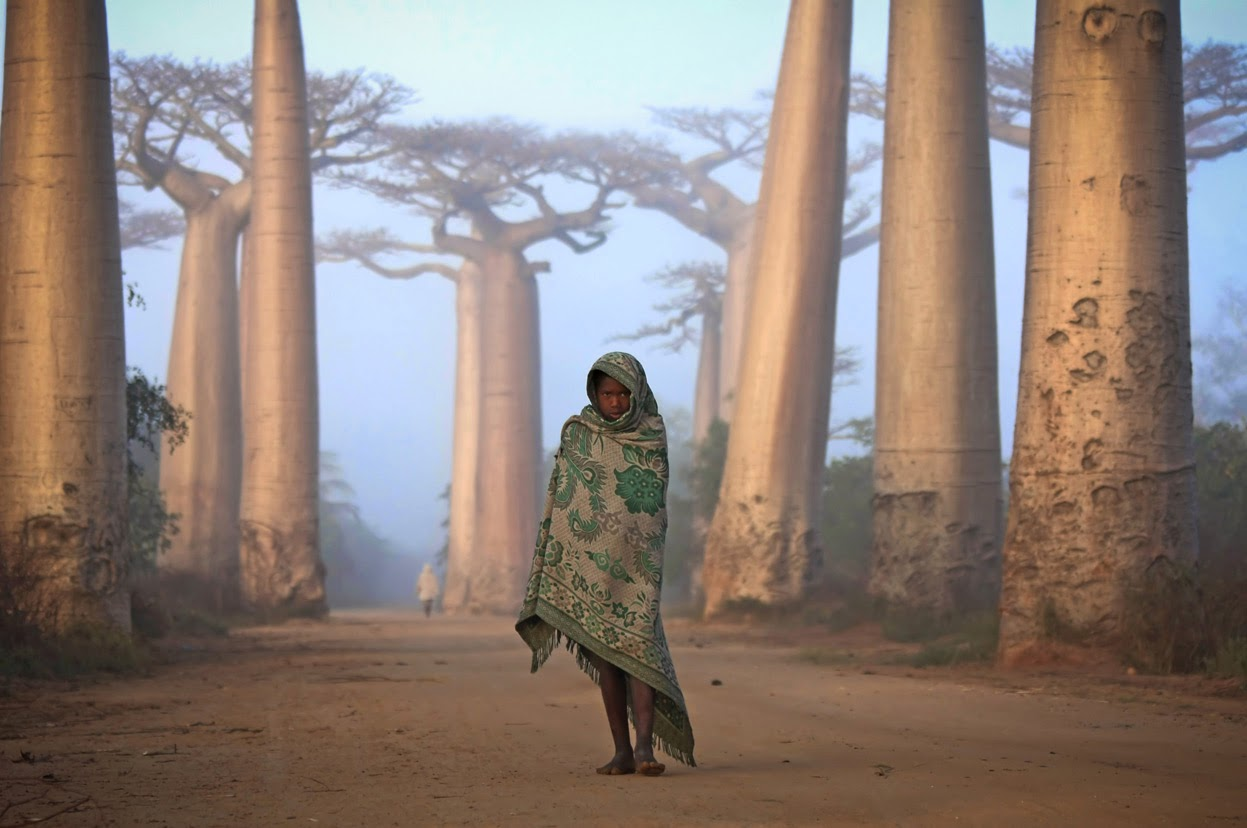 MALAGASY GIRL WALKS AMONG THE BAOBAB TREES - 29 Breathtaking Photographs of The Human Race