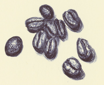 how to draw a coffee bean in illustrator