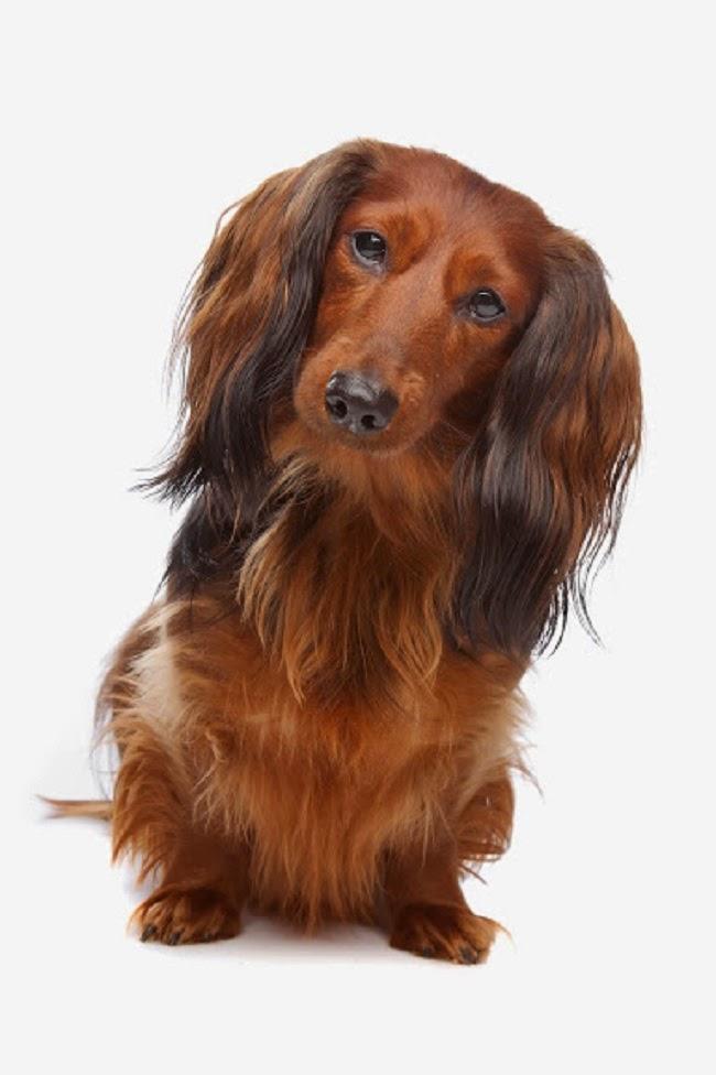 Choroby prostaty u psa
